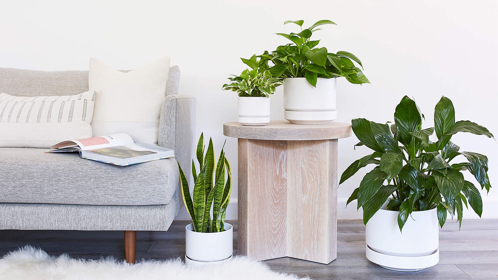 Nature Lovers: Stylish Vessels for Indoor Greenery